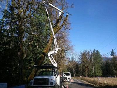 Storm Clean-Up, emergency tree removal