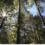 Reasons to Schedule Summer Tree Pruning in Lakewood