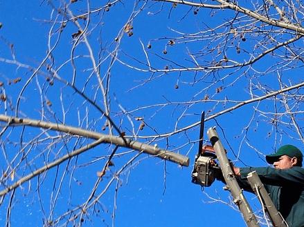 tree pruning types, tree pruning